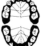 dishlerin-sirasi